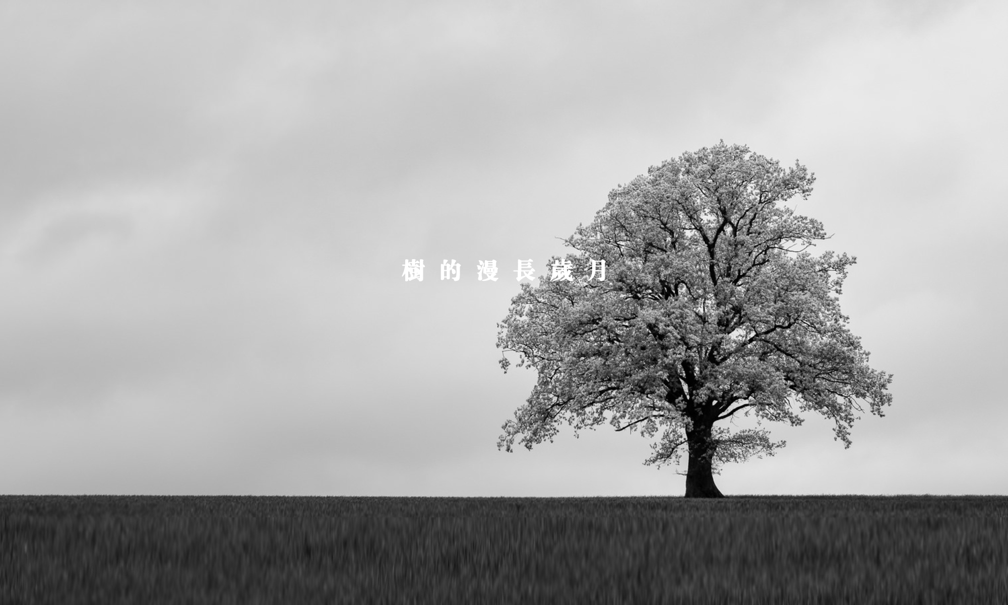 樹的漫長歲月